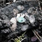 Клад серебряных монет чешуи